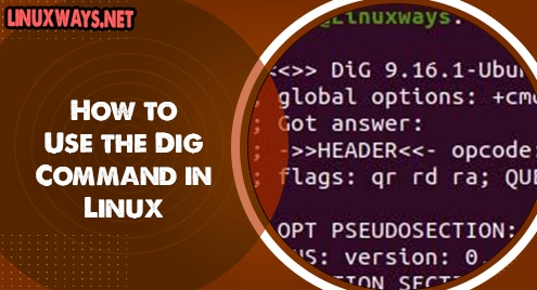 How to Use the Dig Command in Linux